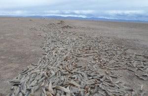 sequia lago poopo