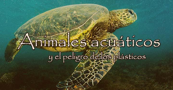 Animales acuáticos y el peligro de los plásticos