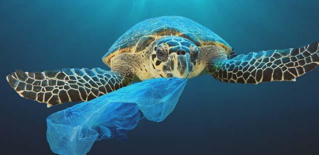 Plastico en los animales