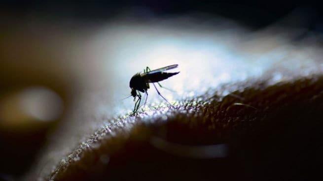 como-ahuyentar-mosquitos-con-vinagre-655x368