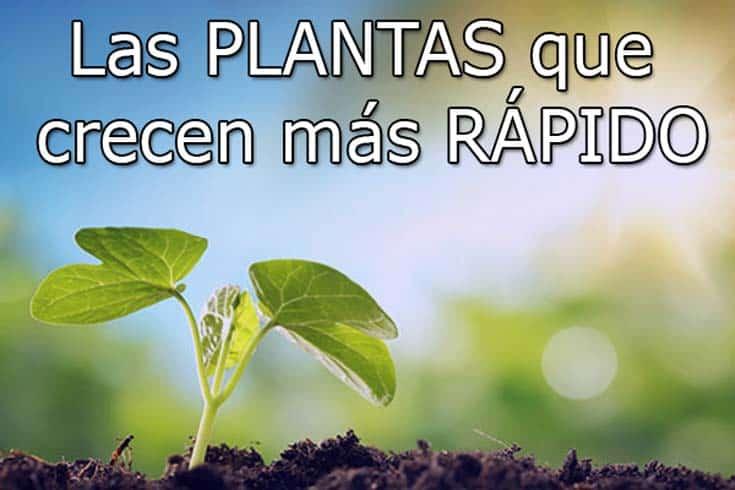 las plantas qeu crecen mas rapido
