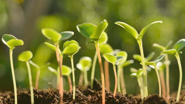 Plantas en un huerto
